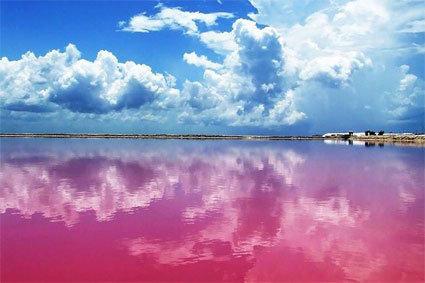 發現拍婚紗的新景點!大自然贈與的粉紅色潟湖